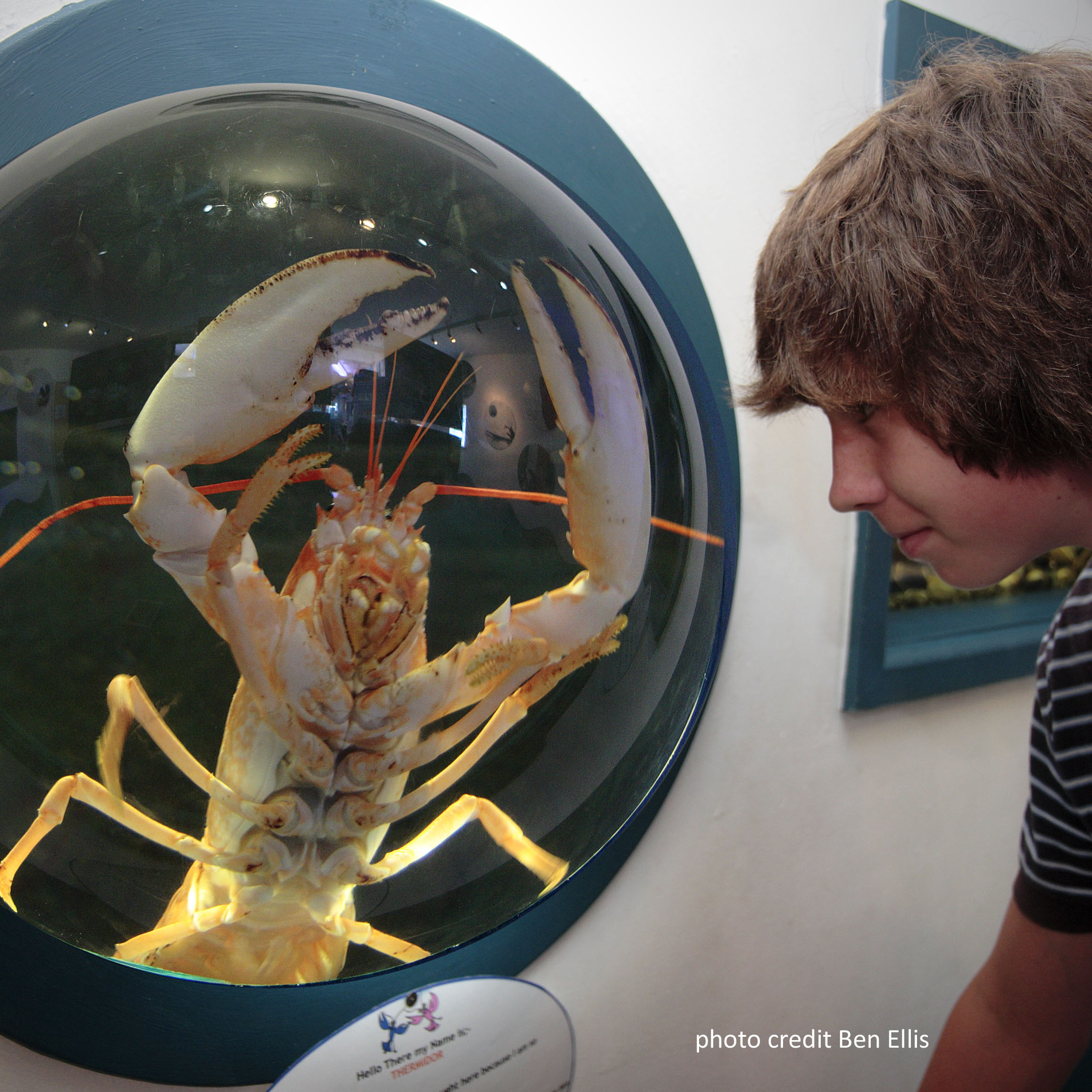 The National Lobster Hatchery A Marine Conservation Charity | Lobster House